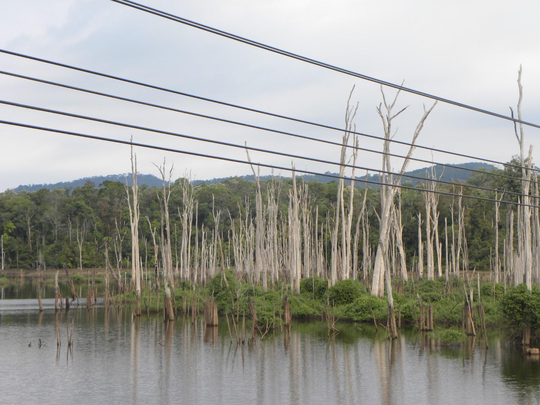 arbres à l'eau