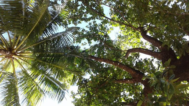 Nagpali plage (1)