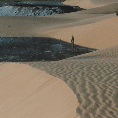 Sahara mauritanien seules