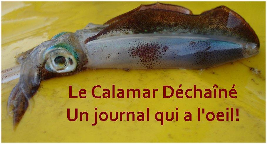 Calamar dechaine