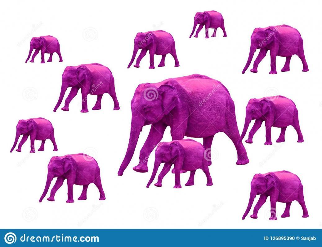 Voir les elephants roses 126895390